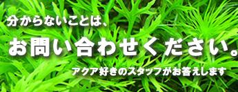 熱帯魚の育て方と水草の育て方のお問い合わせ先
