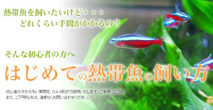 初心者の方へ はじめての熱帯魚の飼い方